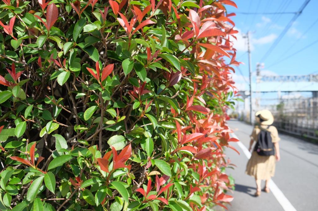 FUJIFILMを持って、高円寺と中野を散歩。夏と秋の間はクソ暑かった