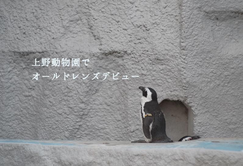 上野動物園でオールドレンズデビュー!色味が最高、ボケ感も最高すぎた