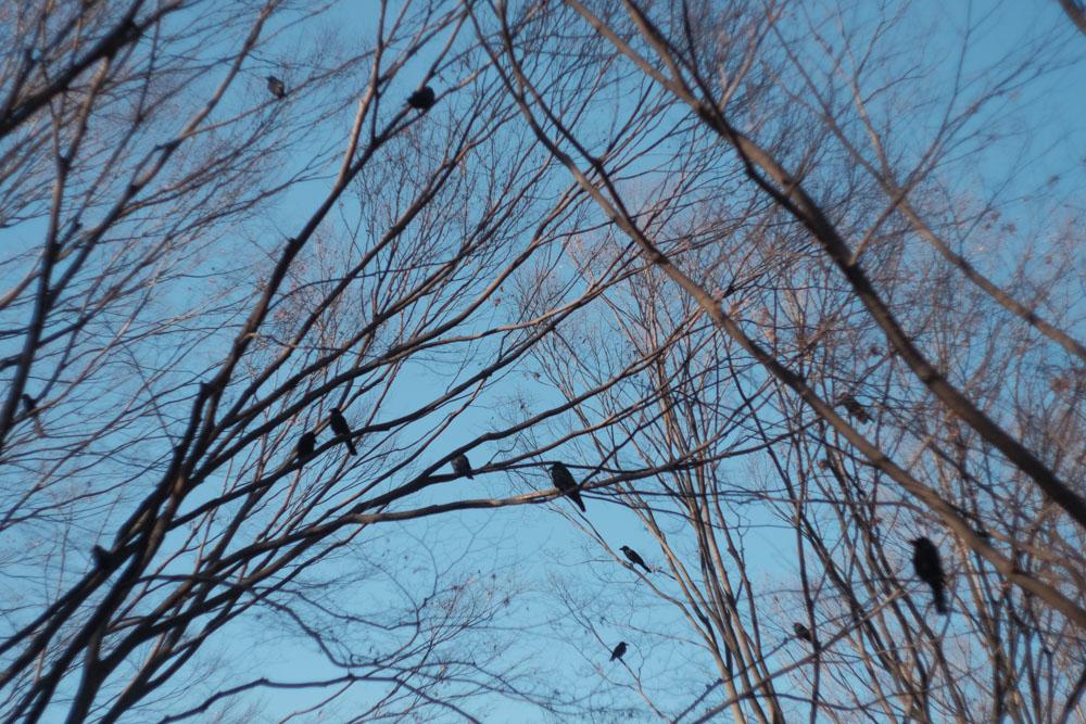 枯れた代々木公園をFUJIFILMで撮って出し。オールドレンズ愛してる