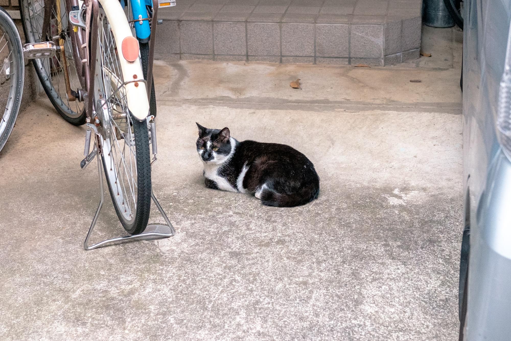 猫と電線とかき氷【谷中銀座商店街】